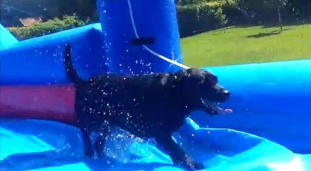 Dogs Have a Blast on a Waterslide