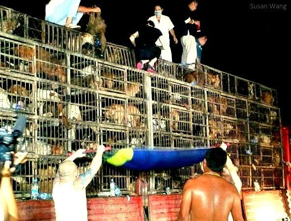 Μία δεύτερη ευκαιρία για τους σκύλους στην Κίνα...