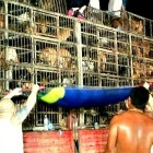 2,400 Dogs Rescued from Chinese Traders & Adopted