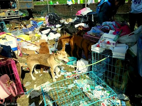 8.10.14 - 2,400 Dogs Rescued from Chinese Traders & Adopted3