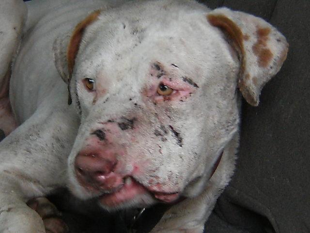 8.12.14 - Memphis Police Offer Cash Reward for Info in Dog Fighting Investigation