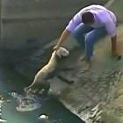Security Camera Captures Rescue of Ecuador Street Dog