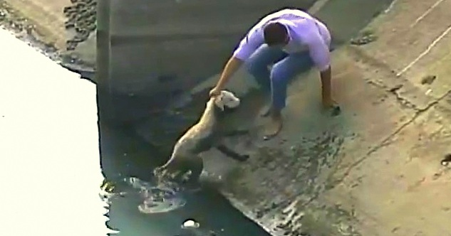 Security Camera Captures Rescue of Ecuador Street Dog