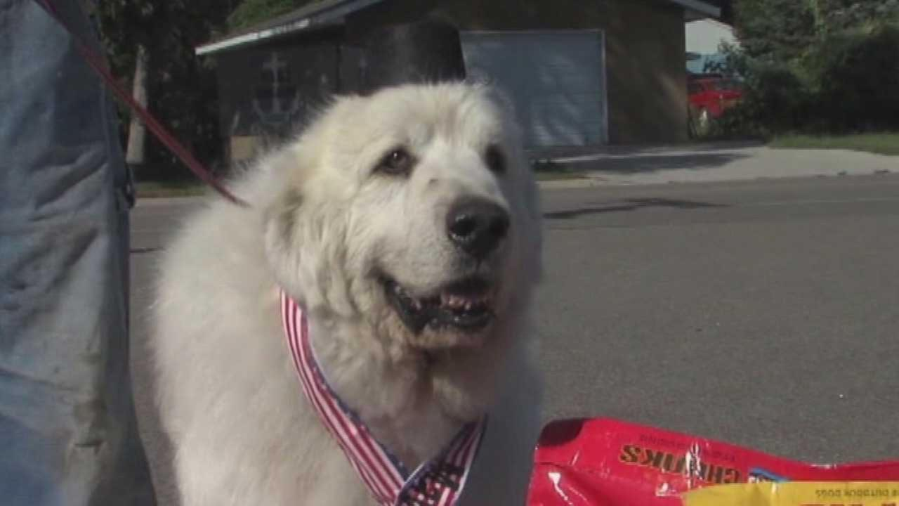 Cormorant, Minnesota Elects Dog as Mayor Over Human Candidate