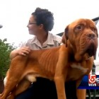 Dog 75 Pounds Underweight Gets Rescued