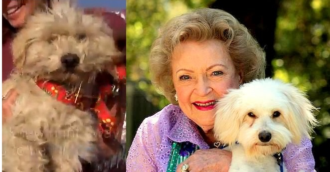 Stray Dogs Gets a Wonderful Rescue, and Is Smooched by Betty White