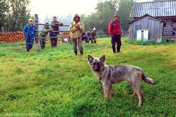8.15.14 - Puppy Saves Toddler Lost in Siberian Wilderness for 11 Days1