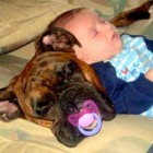 "27 Pets Who LOVE ""Their"" Babies"