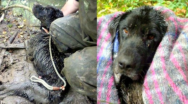 Dog Rescued After Three Agonizing Days Stuck in Mud