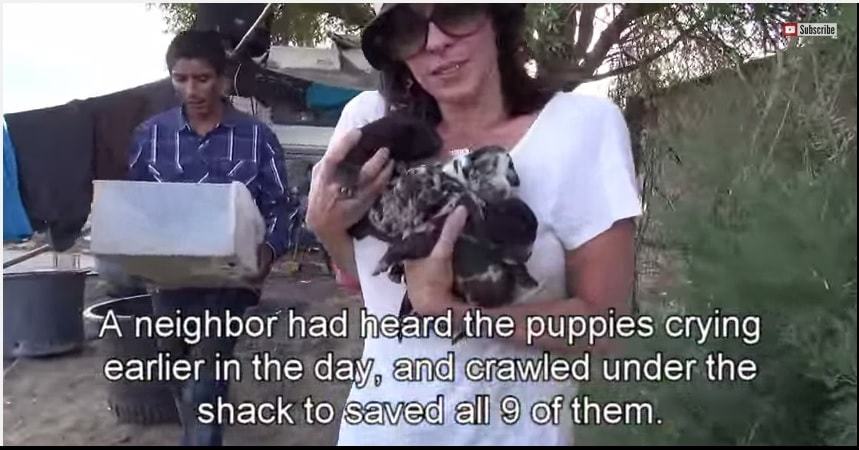 Hope for Paws Rescues Three Dogs and Nine Pups from Desert