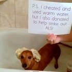 4 Dogs Taking the ALS Ice Bucket Challenge