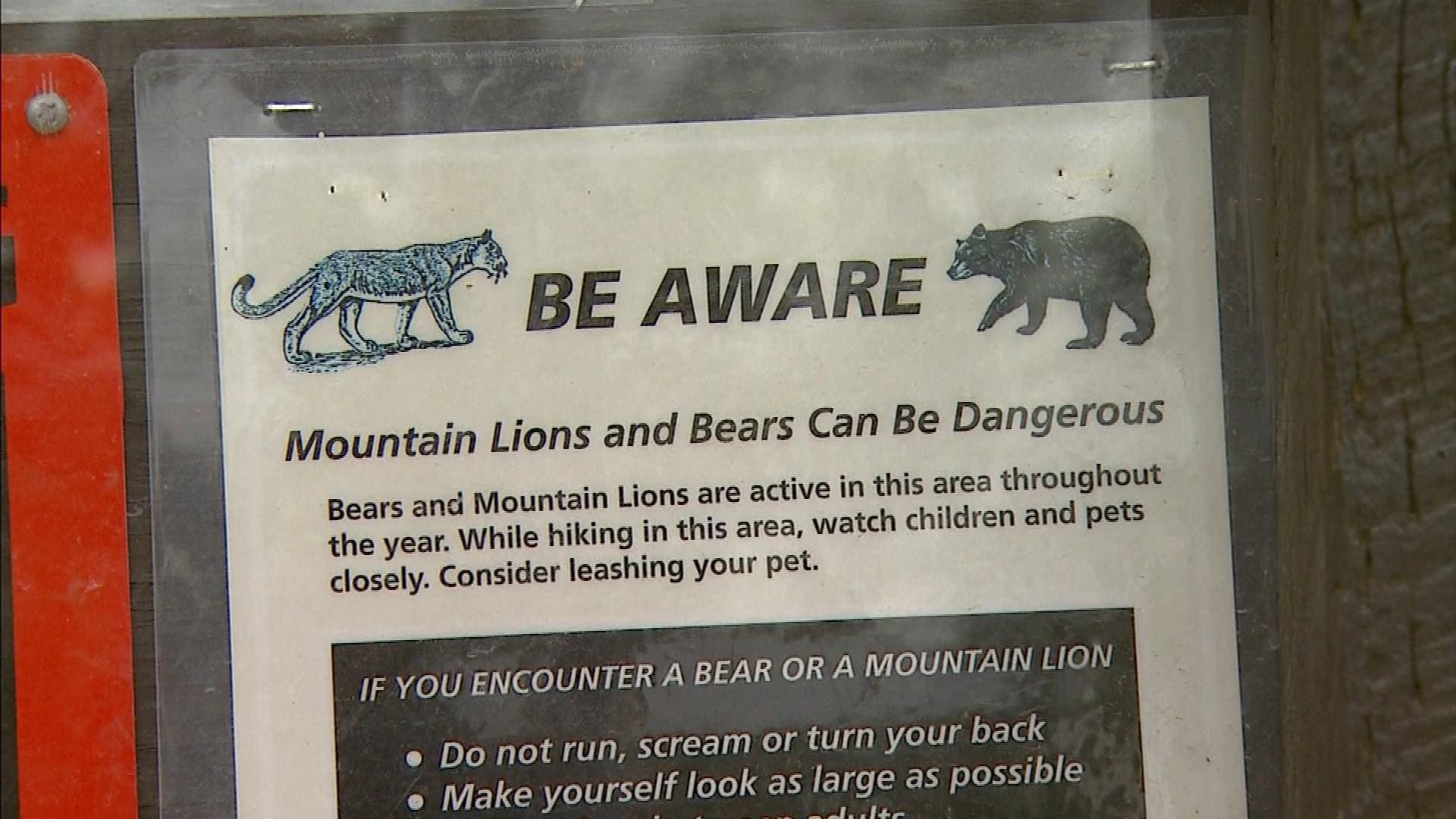 Woman and Dog Chased in Park by Bear in Colorado