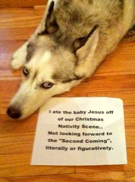 8.21.14 - Best Dog Shaming Photos10