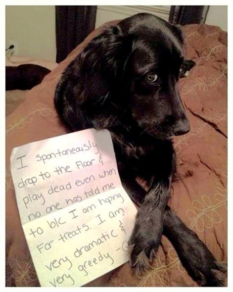14 Of The Funniest Dog Shaming Photos Ever Life With Dogs