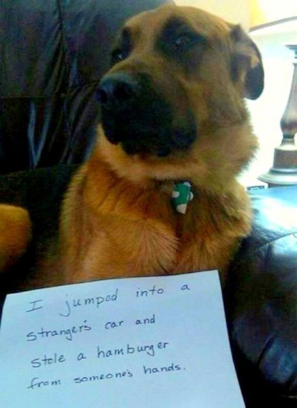 8.21.14 - Best Dog Shaming Photos14