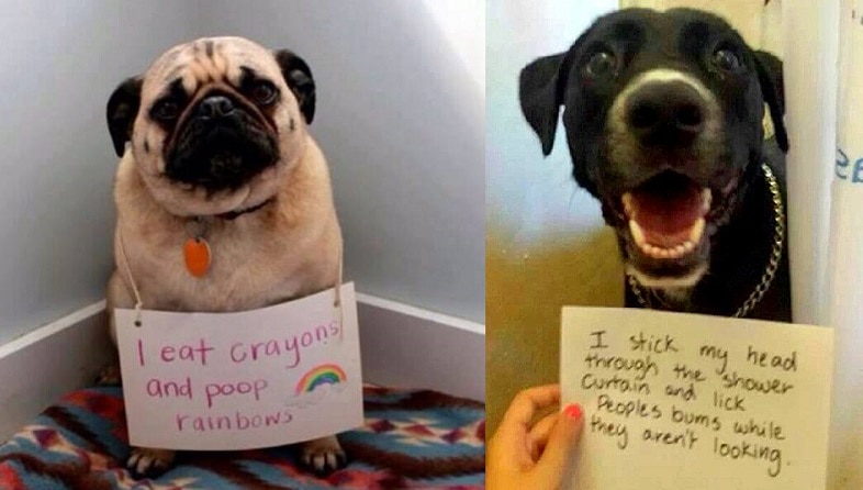 Adopted Dog Misbehaving