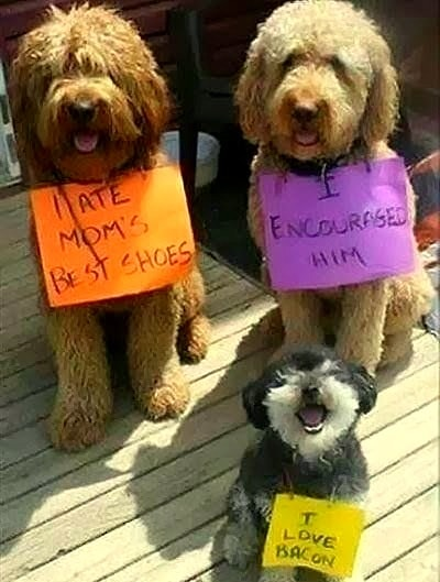 8.21.14 - Best Dog Shaming Photos4