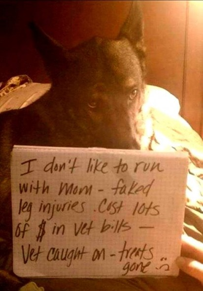 8.21.14 - Best Dog Shaming Photos5