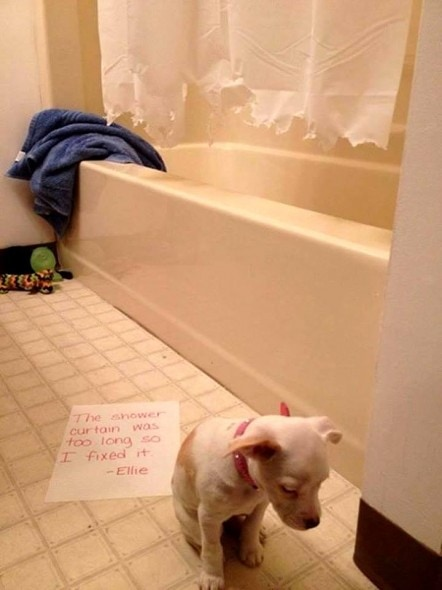8.21.14 - Best Dog Shaming Photos6