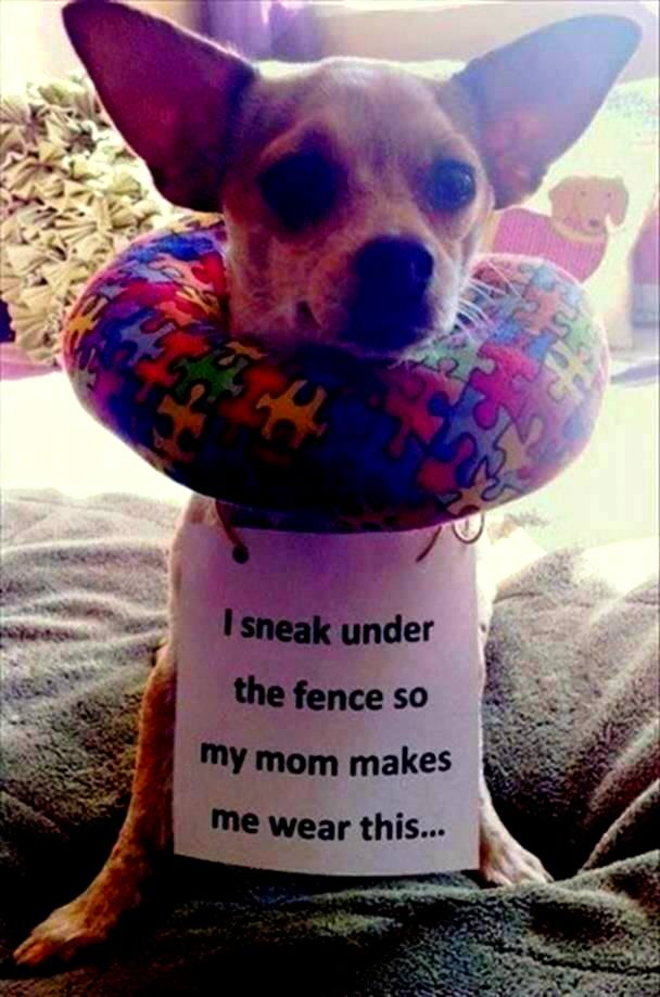 Of The Funniest Dog Shaming Photos Ever - 21 hilarious dog moments