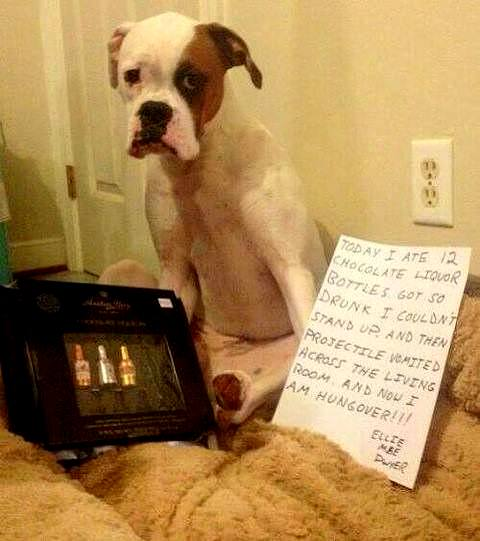 8.21.14 - Best Dog Shaming Photos9