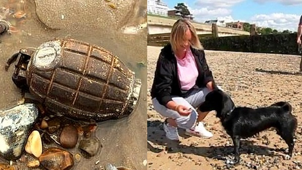 Dog Almost Plays Catch with WWII Grenade