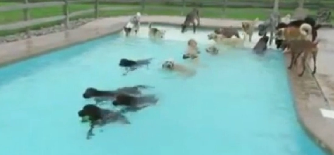 Doggy Pool Parties Becoming all the Rage
