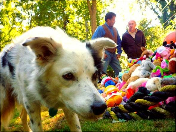 8.22.14 - Dog Record Breakers13