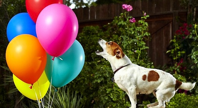 15 Amazing World Record-Holding Dogs