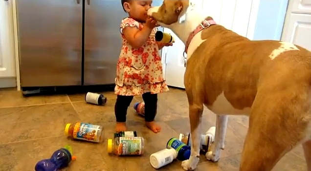 8.22.14 - Vicious Pit Bull Attacks Baby Girl
