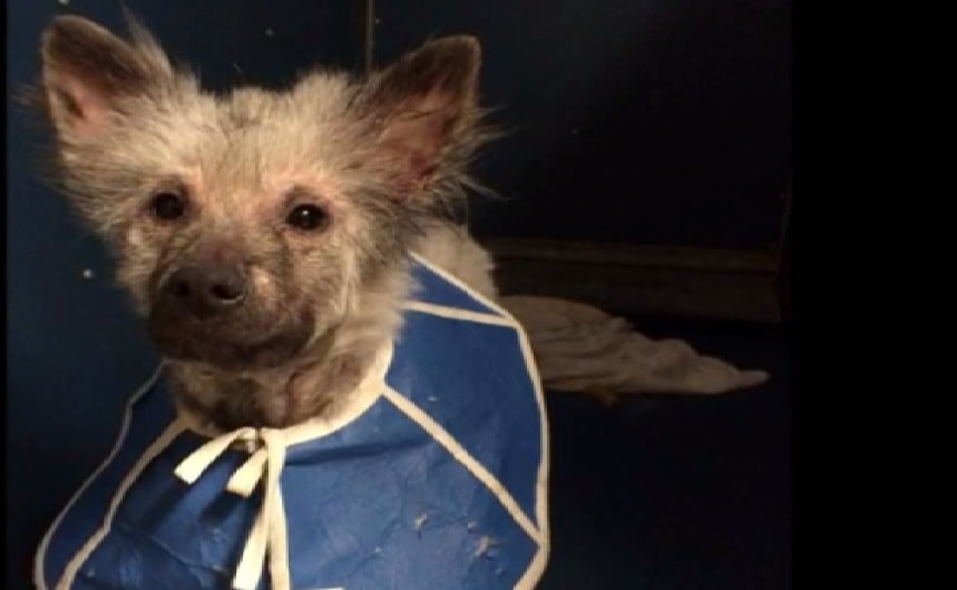 Harrowing Story of Puppy Mill Dog's Rehabilitation