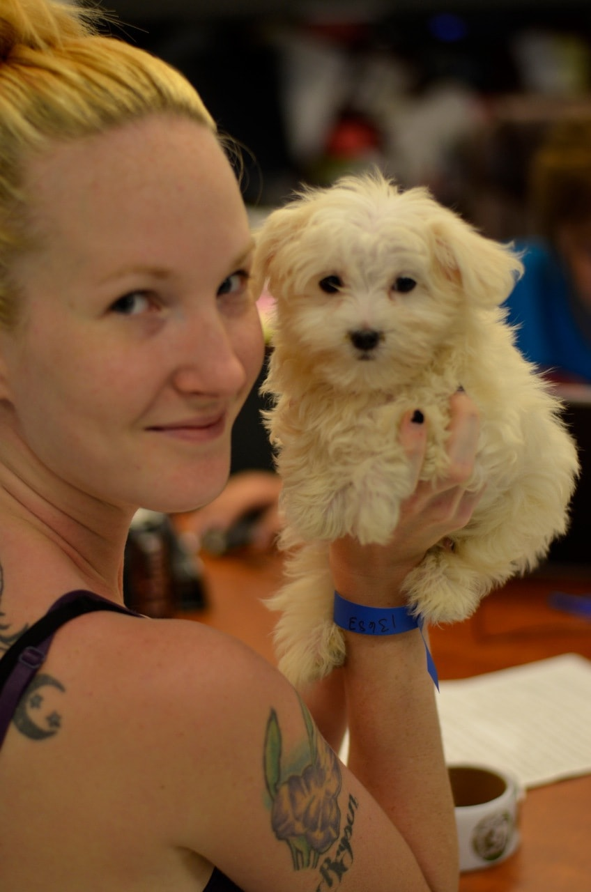 Over 120 Dogs Adopted Out in Shelter Event