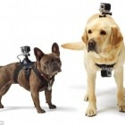 The GoPro Fetch is giving a Whole New Meaning to Dog's Eye View