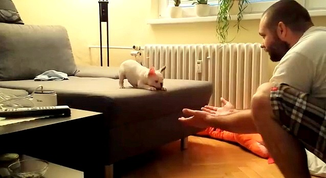 "French Bulldog Puppy Makes ""Romantic"" Leap into Owner's Arms"