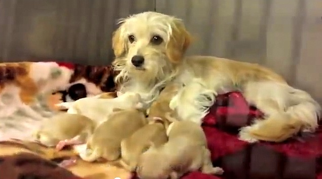 They Went to Rescue Six Puppies, But Then…