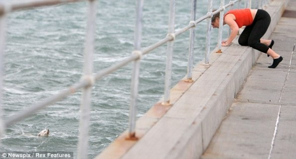 8.4.14 - Australian man Dives Off pier to Save Drowning dog During Grandmother2