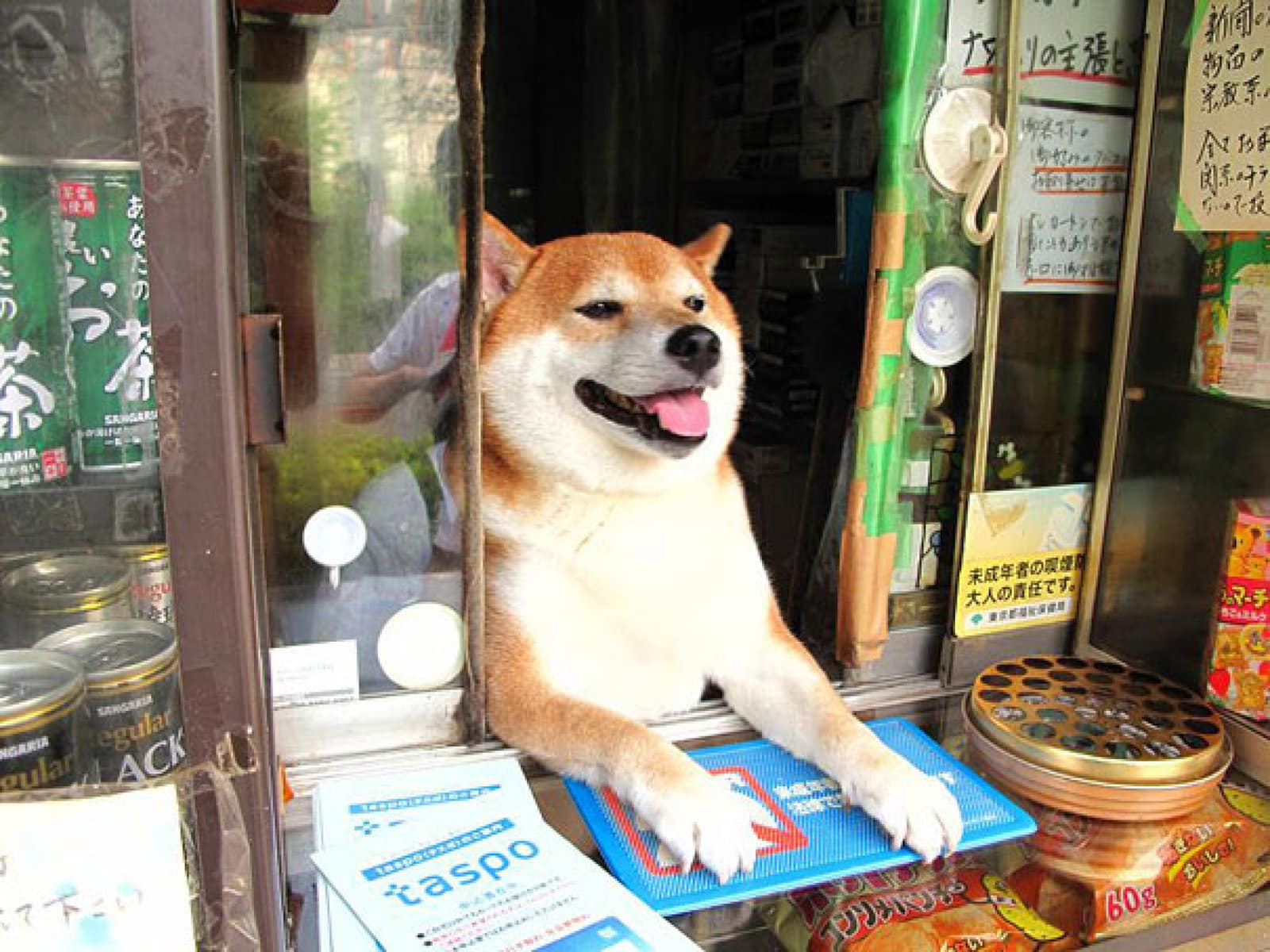 Dog Helps Owners run Corner Store in Japan