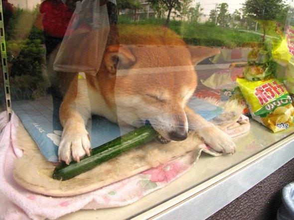 8.4.14 - Dog Helps Owners run Corner Store in Japan2