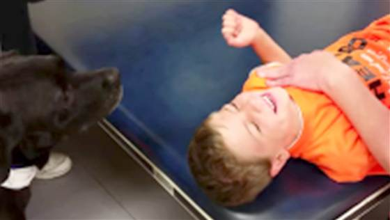 8.4.14 - Therapy Dog Helps boy Regain Mobility after Stroke1