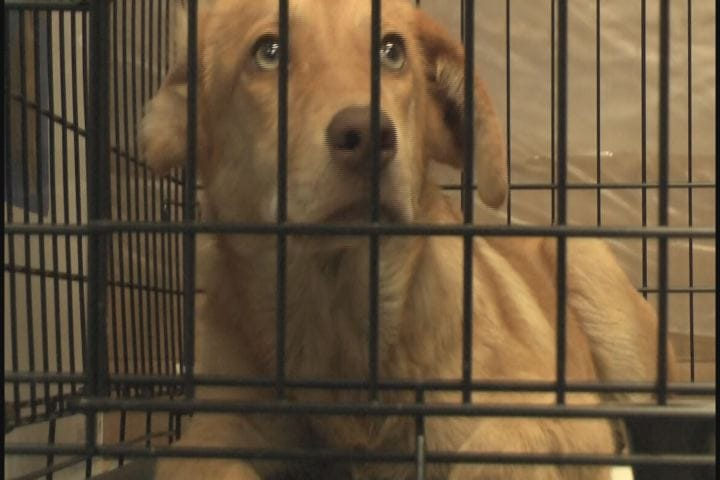 HSUS Rescue Workers Remove 65 Dogs from Home in Mississippi