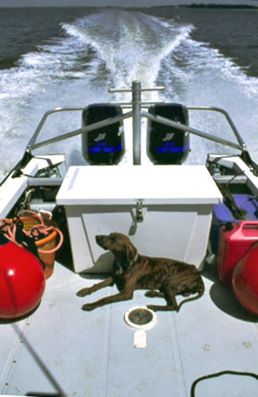Dog Rescued from Florida Intracoastal Waterway