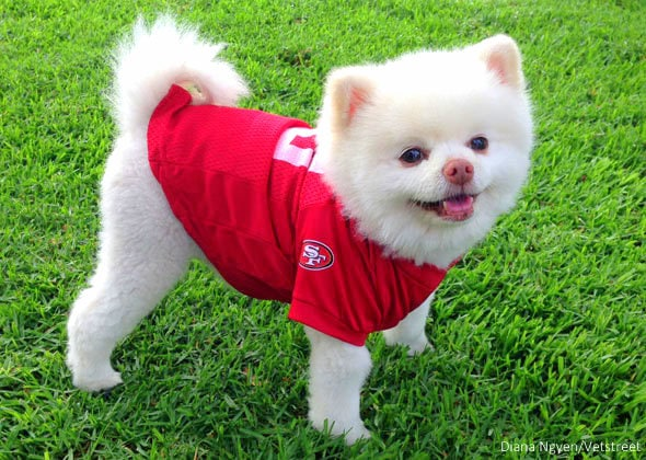 8.8.14 - 17 Pets Ready for Football1