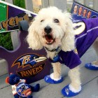 17 Pets Who Are Ready for Football Season