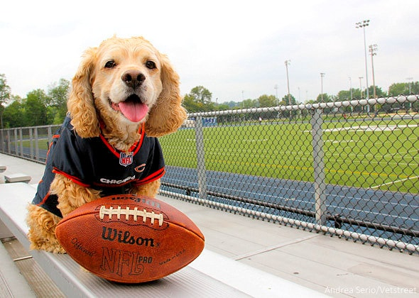 8.8.14 - 17 Pets Ready for Football5