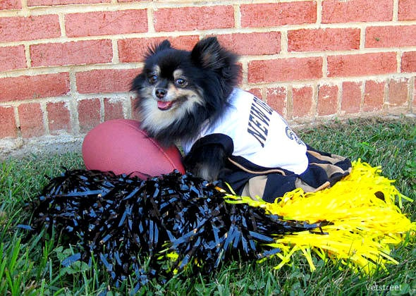 8.8.14 - 17 Pets Ready for Football6