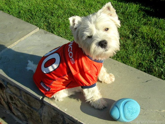 8.8.14 - 17 Pets Ready for Football7