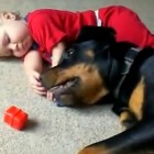 "Babies Getting Love from So-Called ""Aggressive Dogs"""