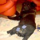 Good Samaritan Rescues Hit-and-Run Romanian Dog
