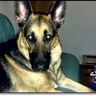 Community Unites to Find Soldier's Missing Dog