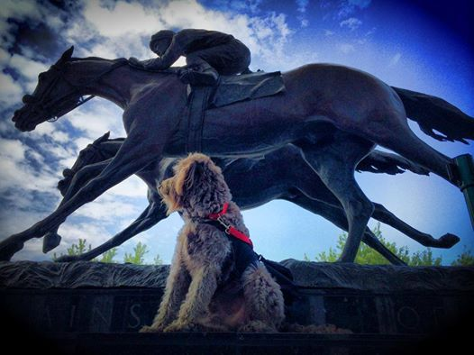 8.9.14 - Gander the Service Dog Receives Hero Award1